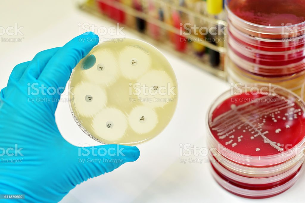 Antimicrobial susceptibility test stock photo