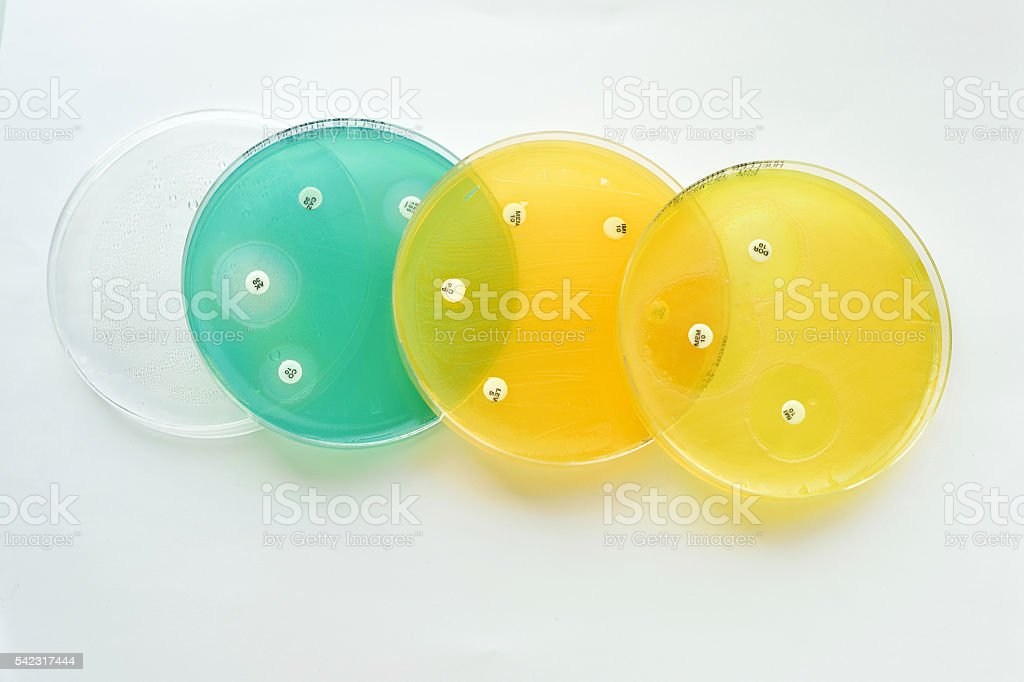 Antimicrobial susceptibility testing stock photo