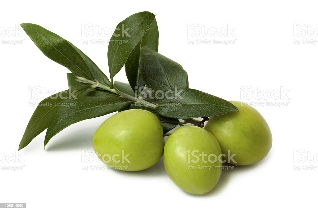 Antipasto olives still attached to the branch with leaves stock photo