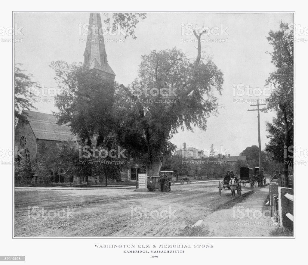 Antique American Photograph: Washington Elm and Memorial Stone, Cambridge, Massachusetts, United States, 1893 stock photo