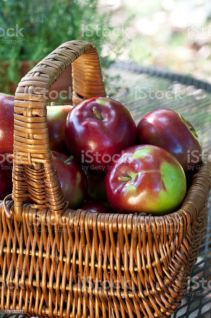 Antique Basket Full of McIntosh Apples on Wrought Iron Table stock photo