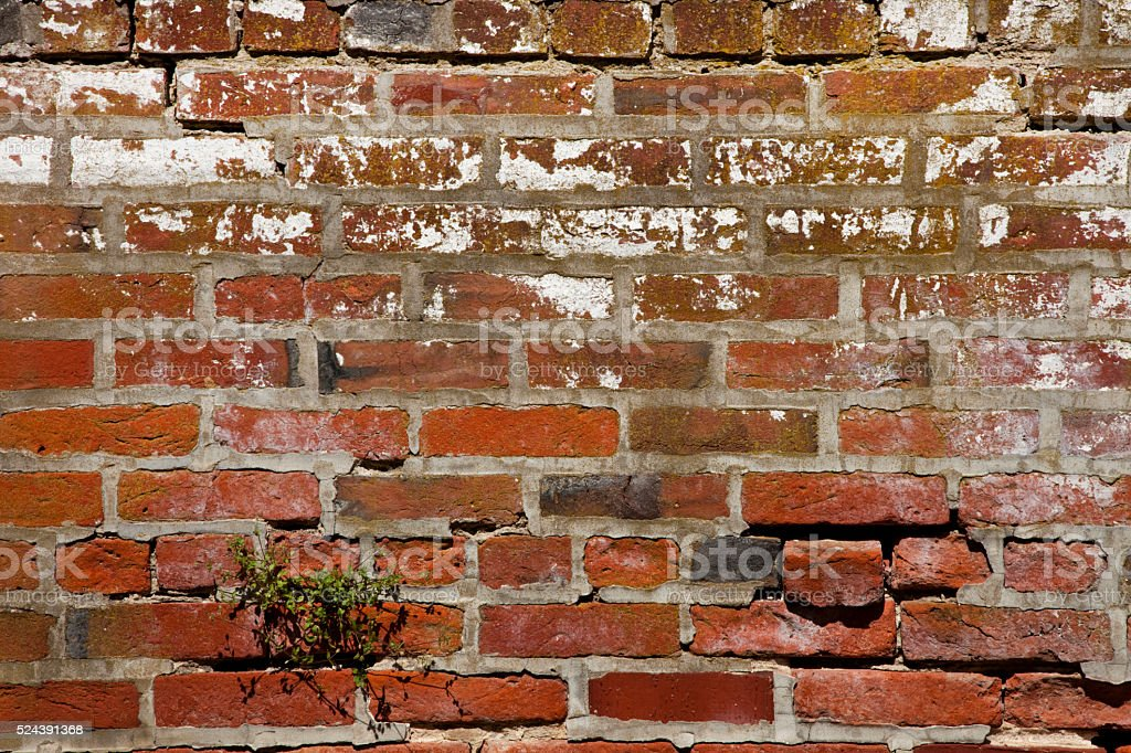 Antique Brick Wall with plant and misplaced brick stock photo
