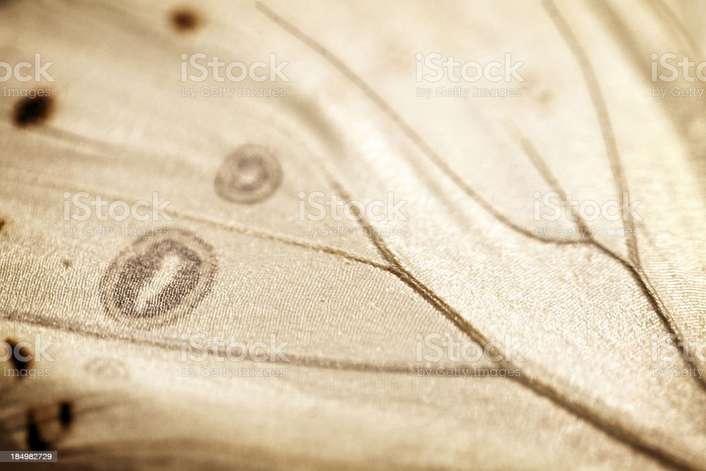 Antique Butterfly wing background stock photo