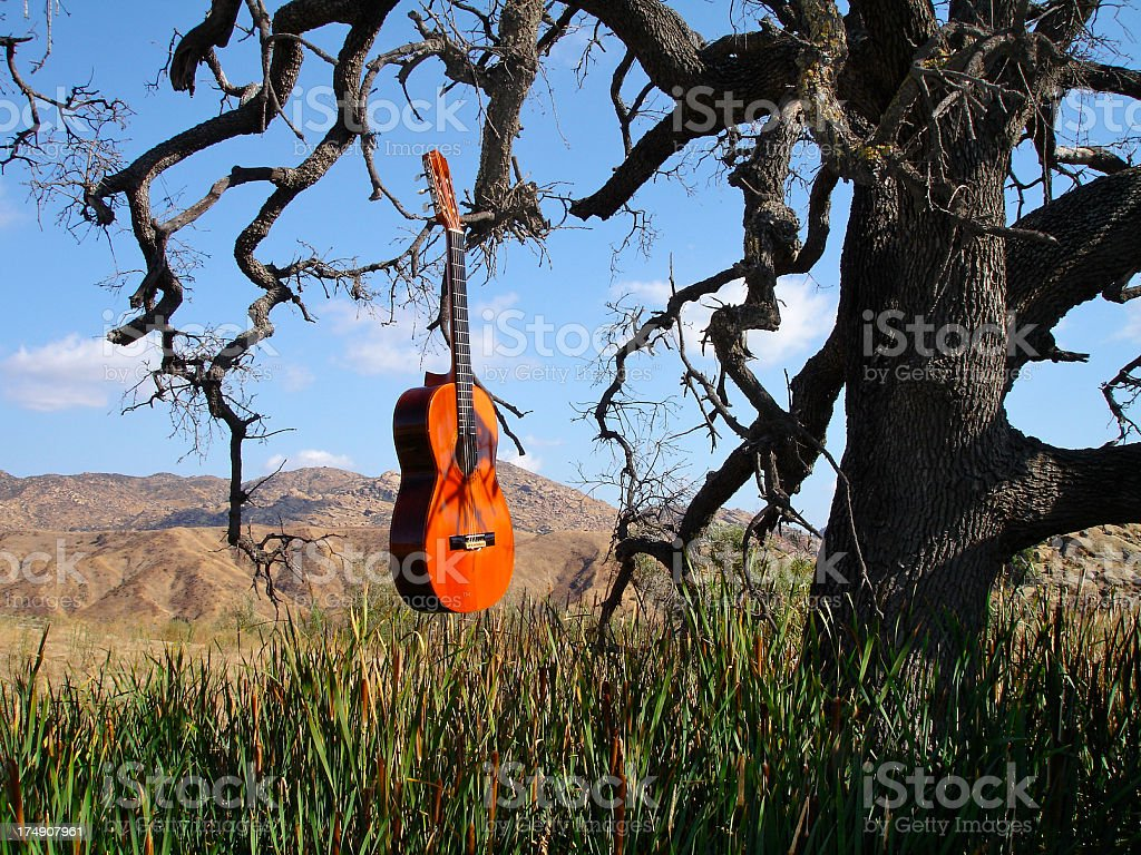 Antique Classical Guitar Floating Tree Cat Tails California stock photo