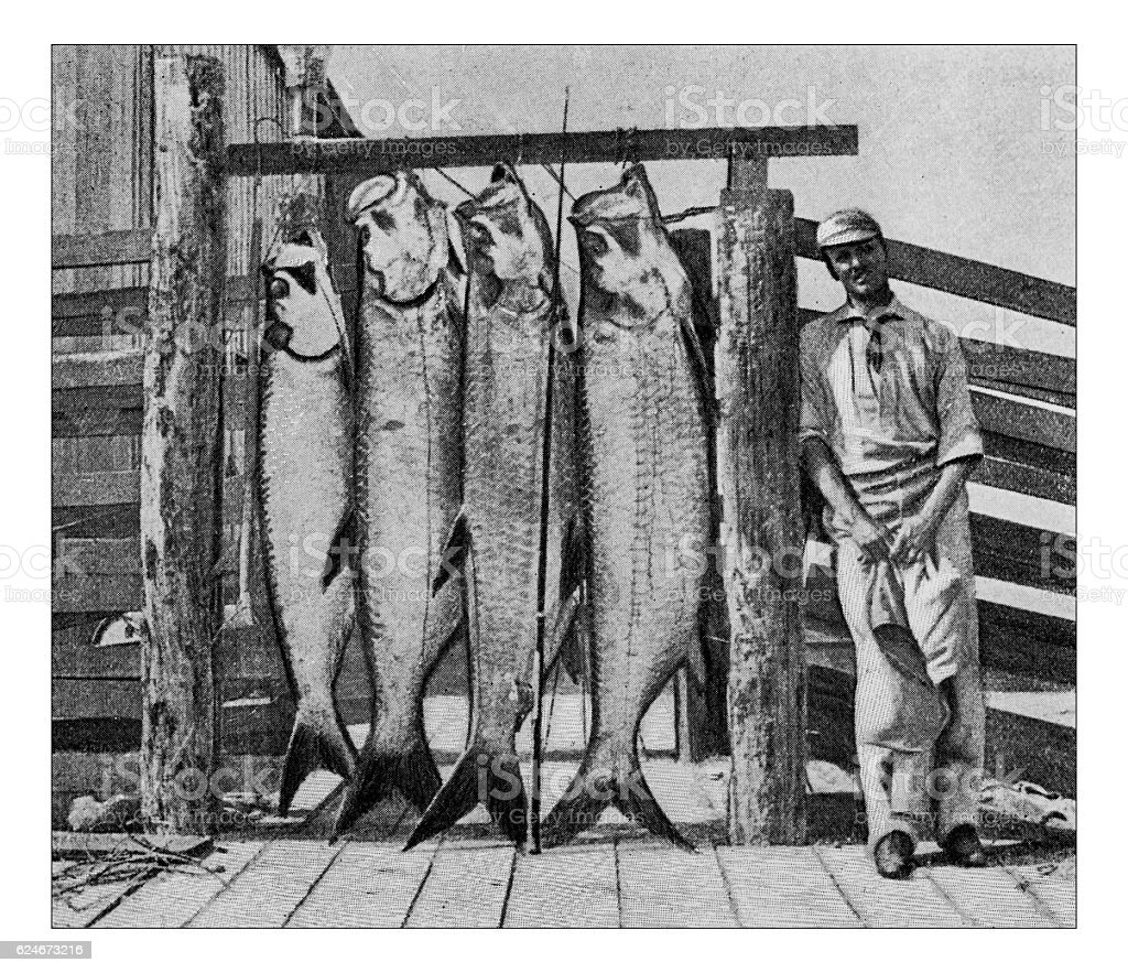 Antique dotprinted photograph of Hobbies and Sports: Tarpon fishing stock photo