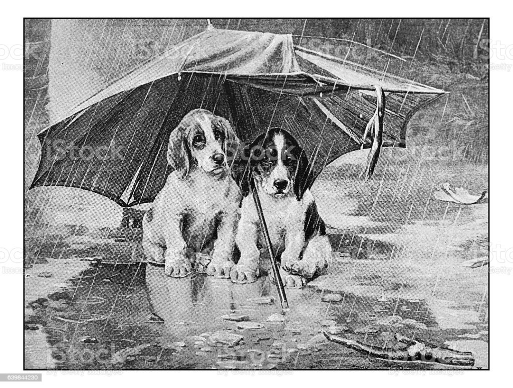 Antique dotprinted photograph of painting: Dogs under umbrella stock photo