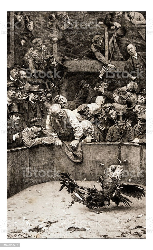 Antique illustration of 'Combat de coqs en Flandre' by Cogghe stock photo