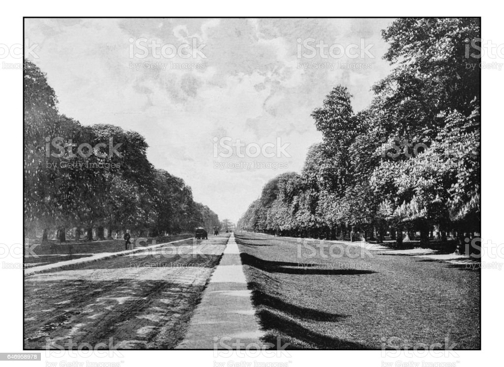 Antique London's photographs: Chestnut avenue, Bushy park stock photo