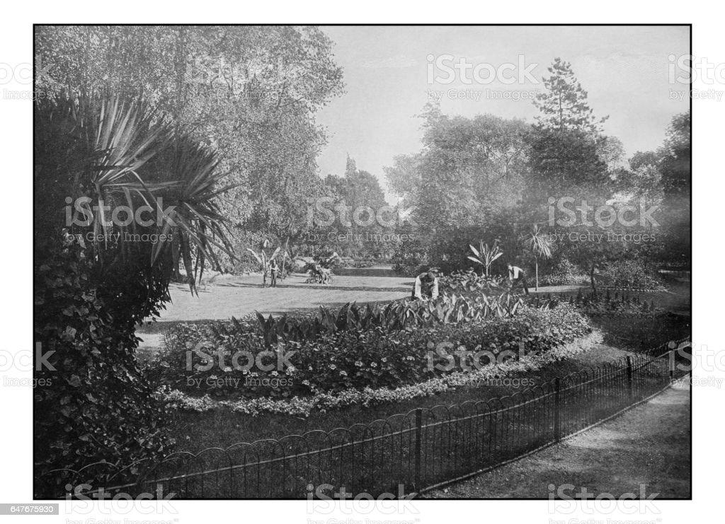 Antique London's photographs: Sub-Tropical Gardens, Battersea Park stock photo
