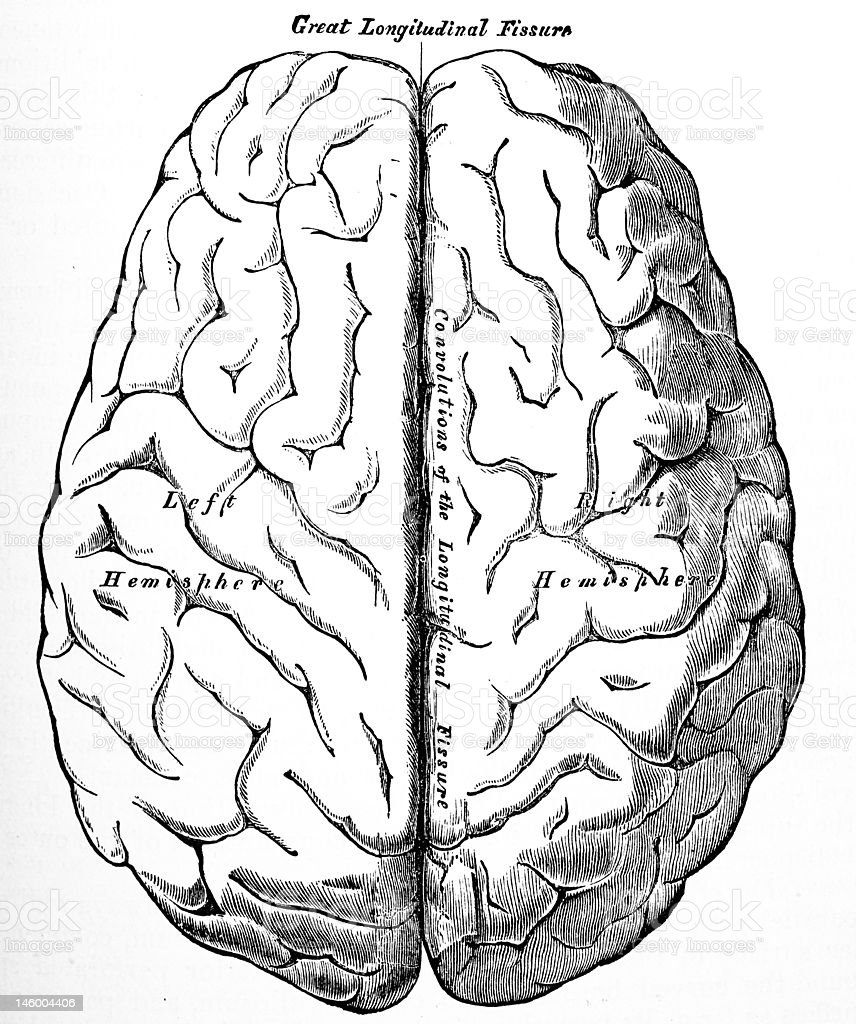 Antique Medical Illustrations | Human brain royalty-free stock photo