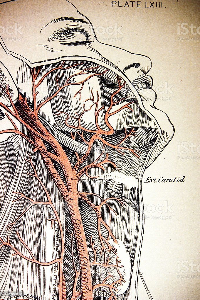 Antique Medical Illustrations | Human Face royalty-free stock photo
