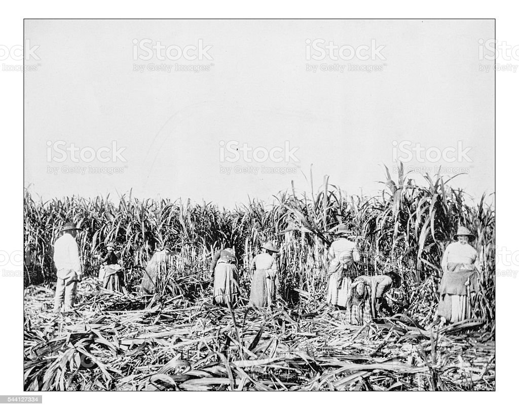 Antique photograph of 19th century slaves in a Lousiana plantation stock photo