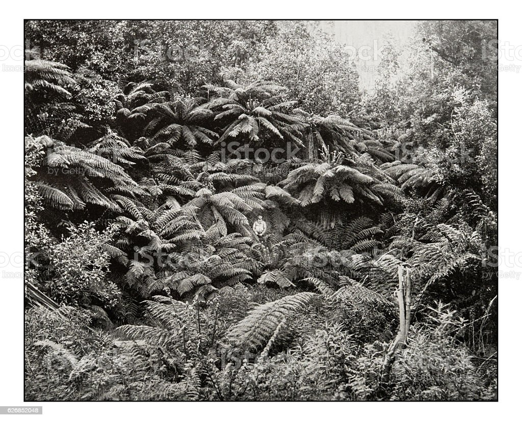Antique photograph of Fern-tree valley under Mount Wellington stock photo