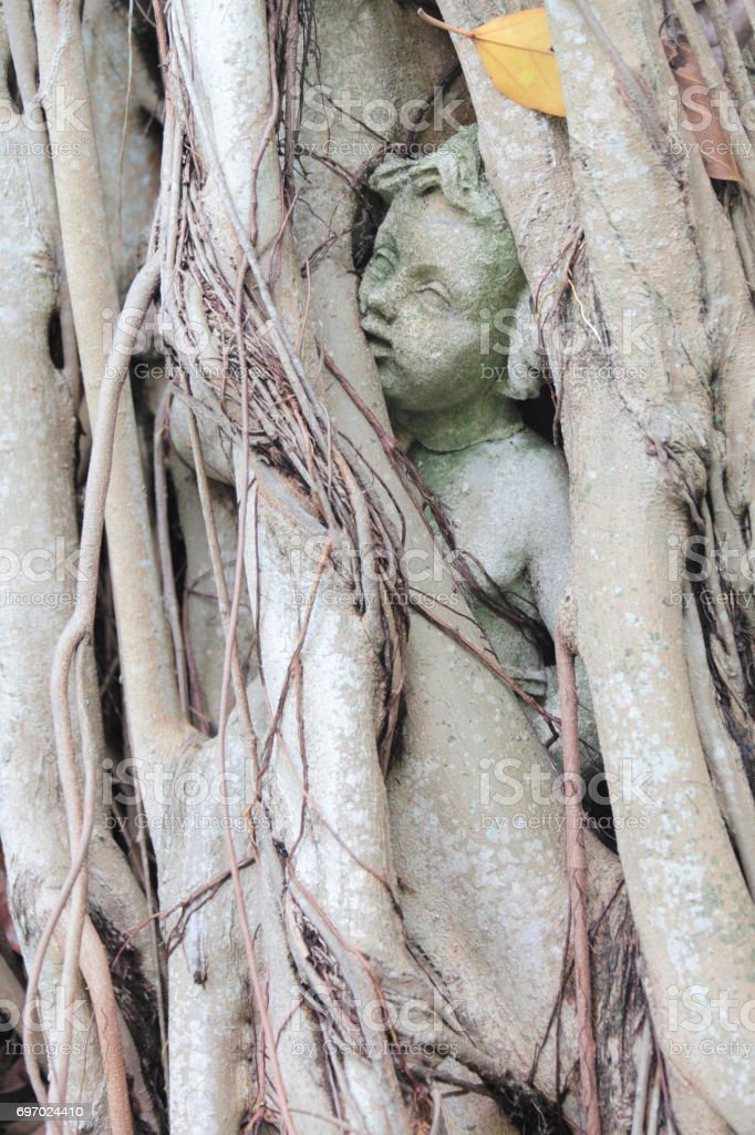 Antique statue encircled by tropical tree roots. Sarasota, Florida,...
