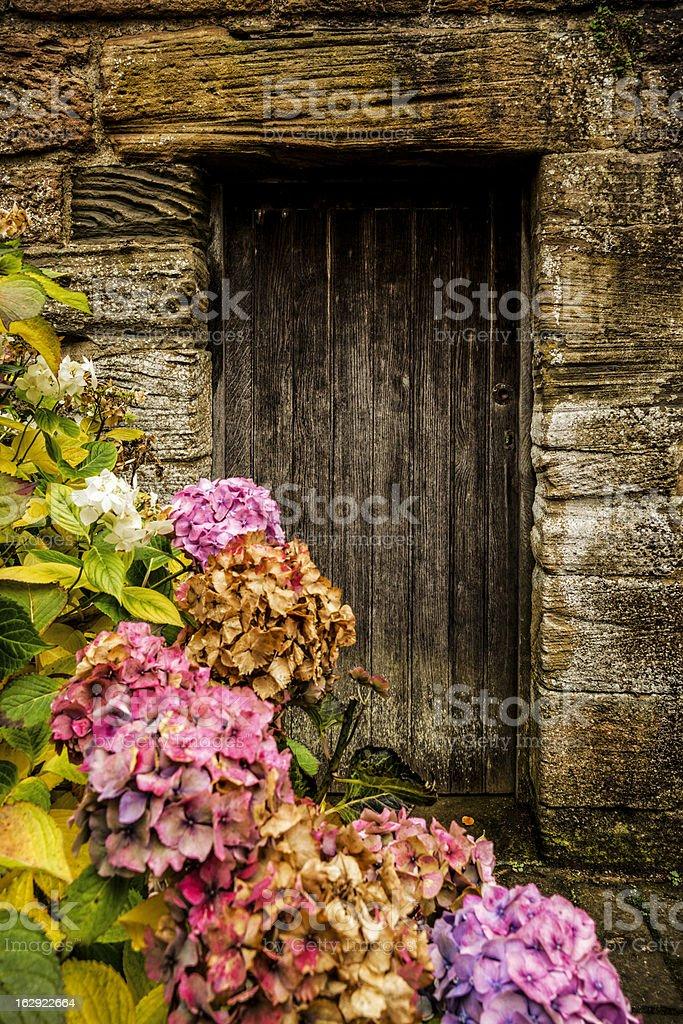 Antique wooden door and hortensia royalty-free stock photo