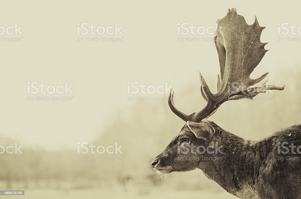 Antler thoughts stock photo