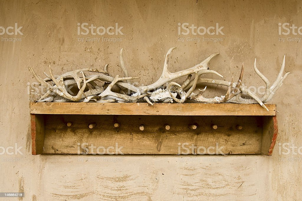 Antlers and bone royalty-free stock photo
