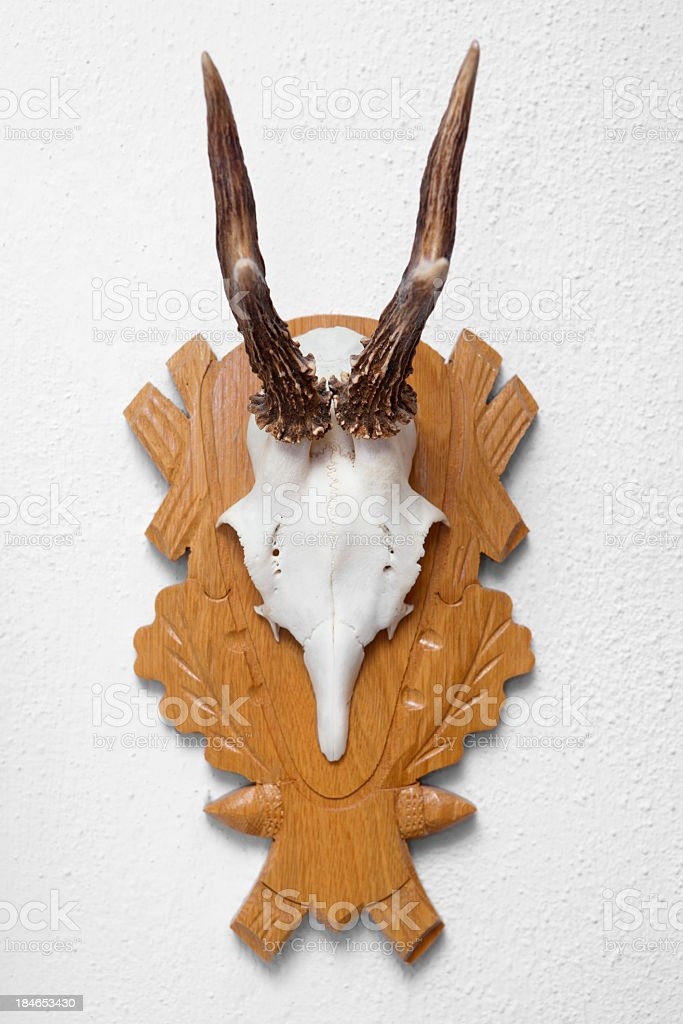 Antlers hanging on a wall stock photo