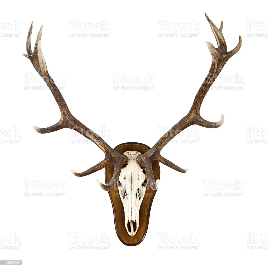 Antlers on a white wall - CLIPPING PATH included stock photo