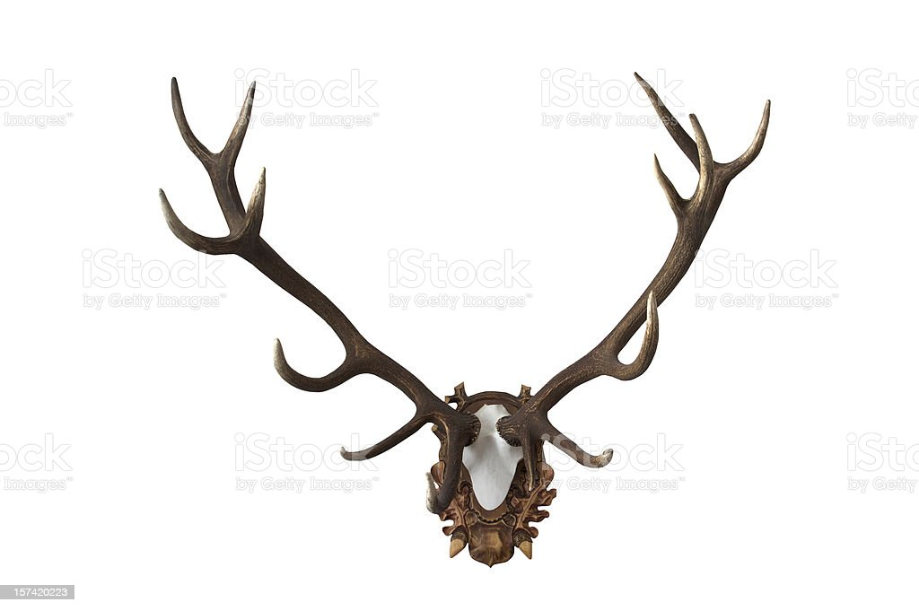 Antlers royalty-free stock photo