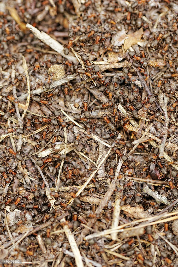 ants and ant hill royalty-free stock photo