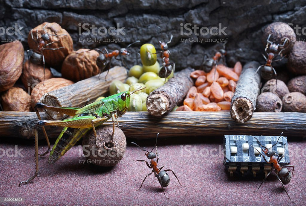 ants and grasshopper , ant tales stock photo