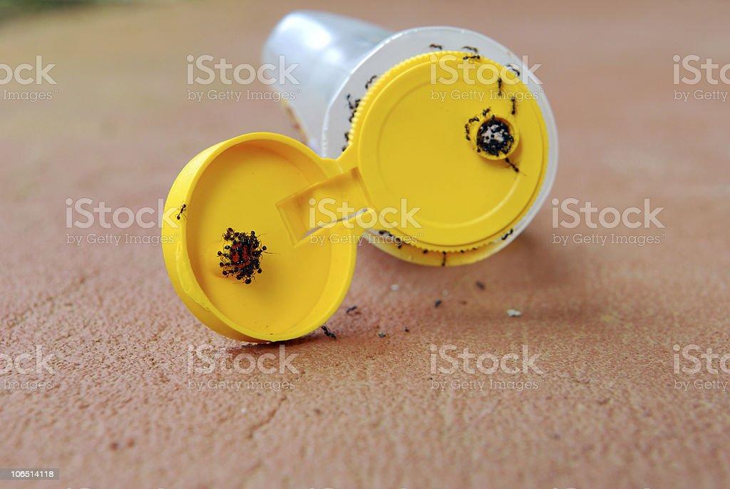Ants and Honey stock photo