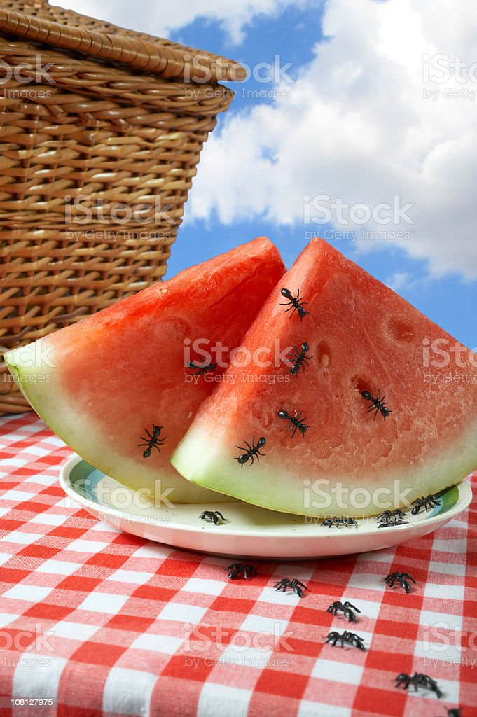 Ants at a picnic stock photo