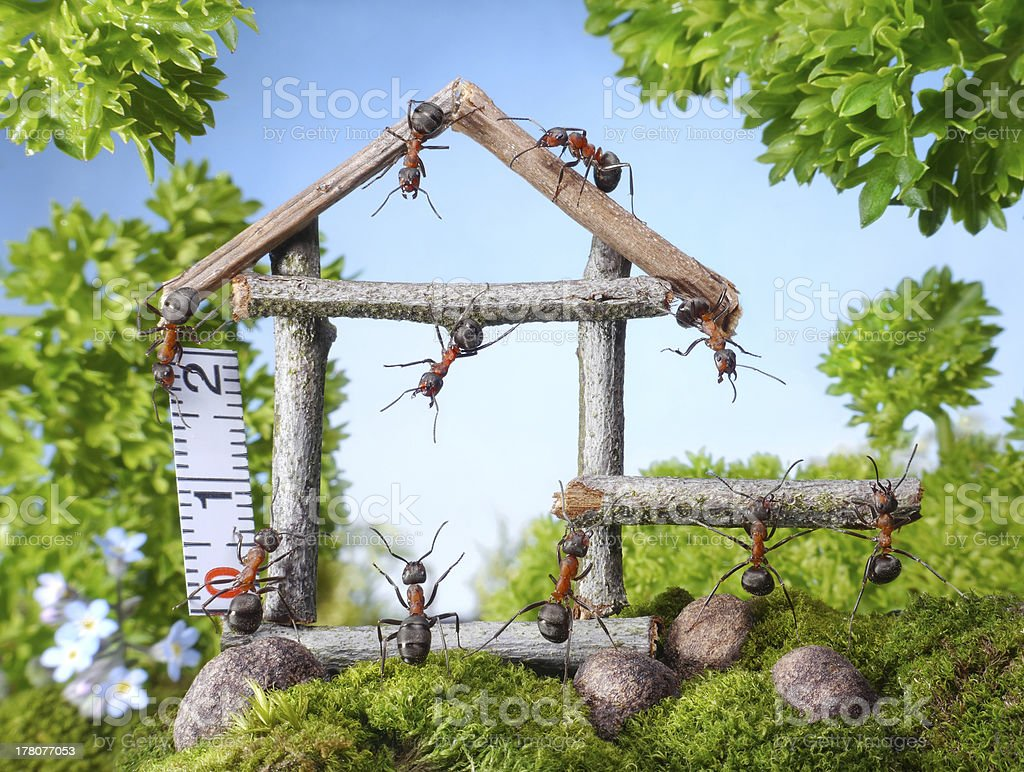 ants constructing wooden house stock photo