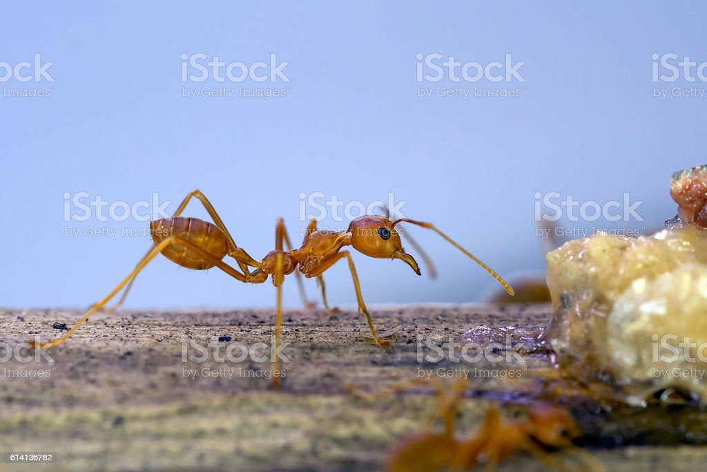 ants find and move around their food stock photo