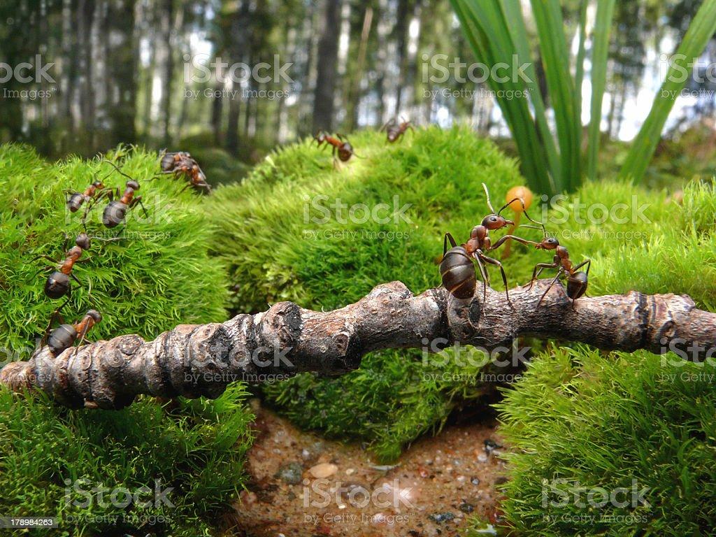 ants go to school stock photo