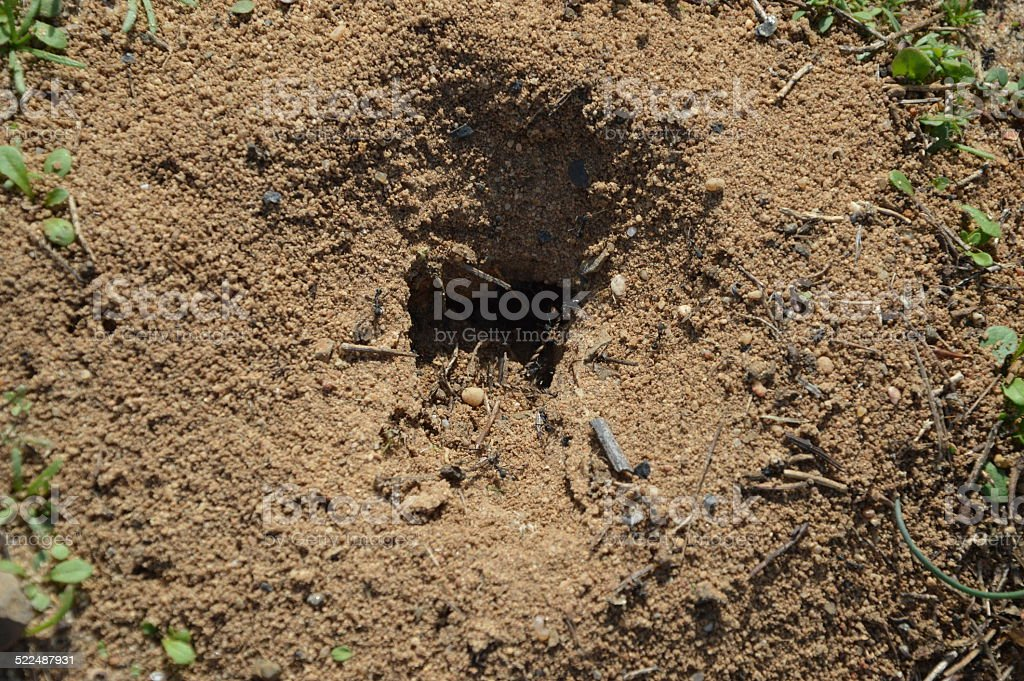 Ants in the anthill entry stock photo
