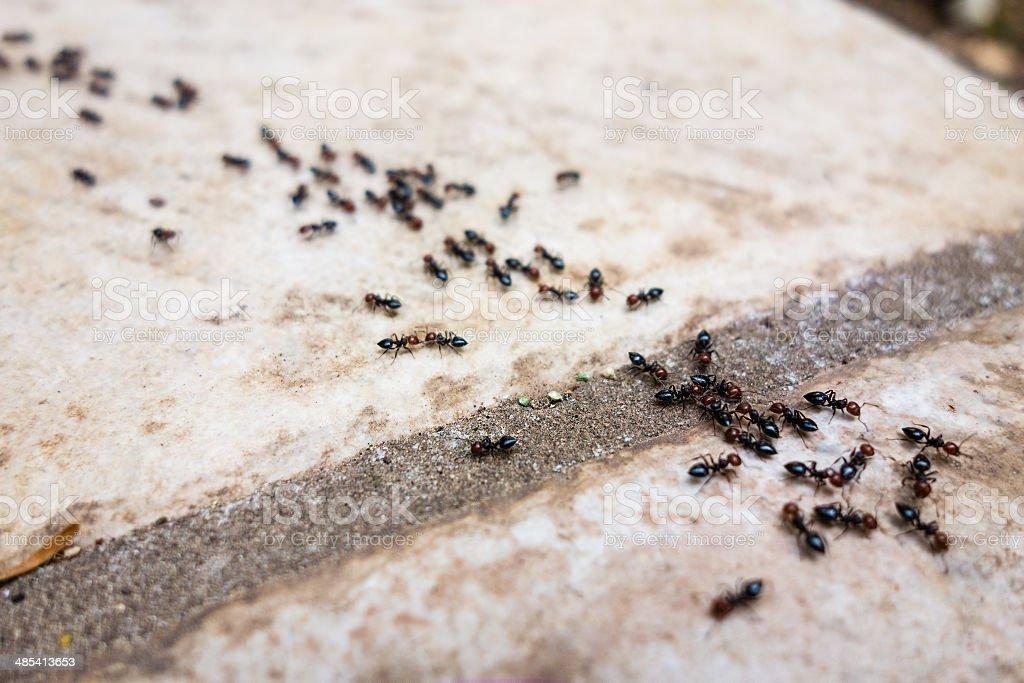 Ant's line stock photo