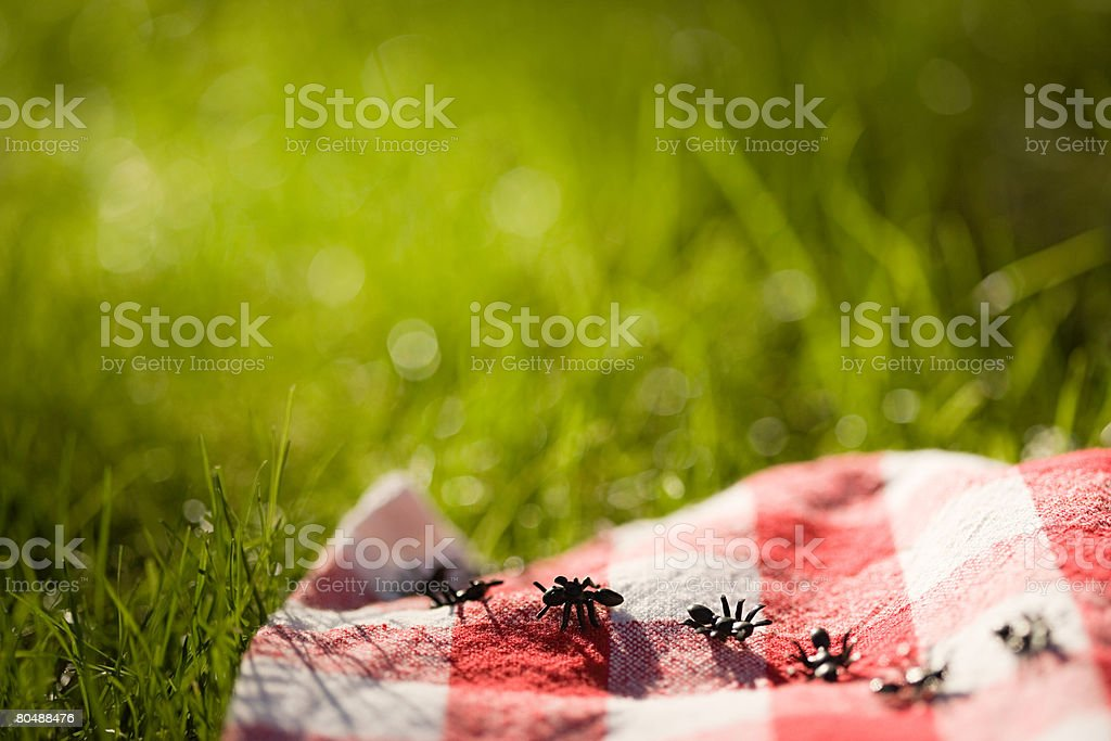 Ants on a picnic blanket stock photo
