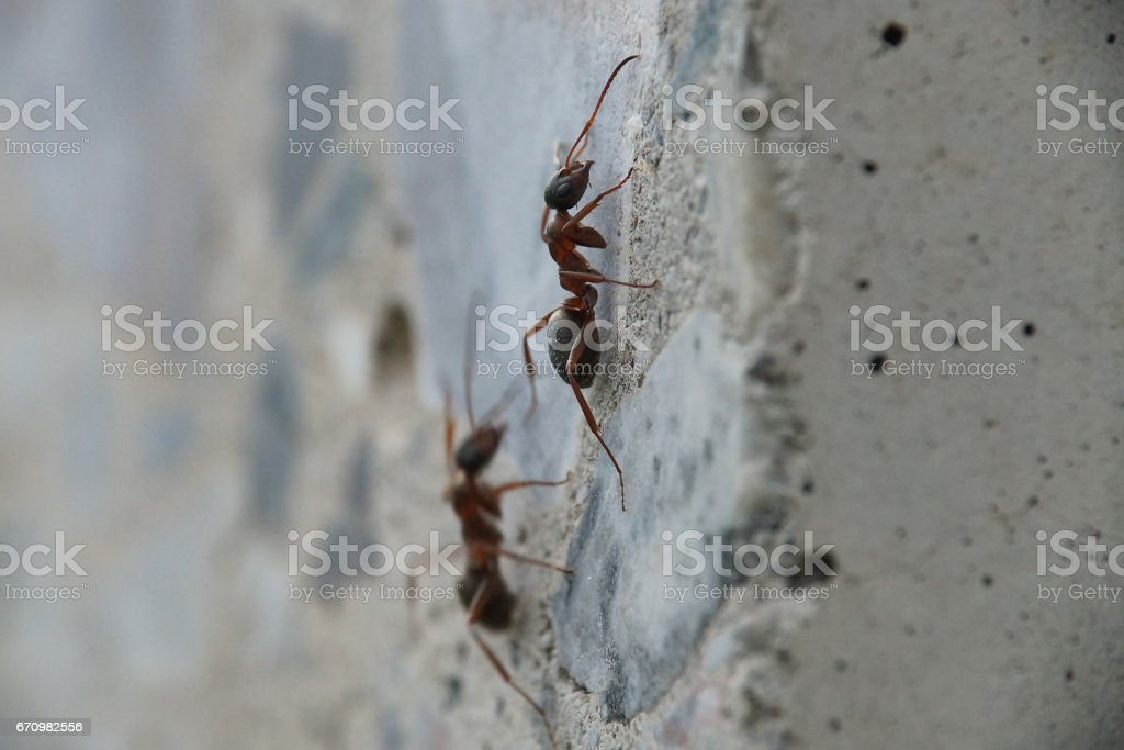 ants on concrete wall stock photo
