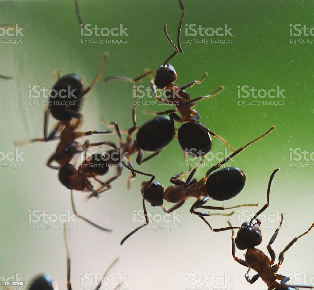 ants on glass stock photo