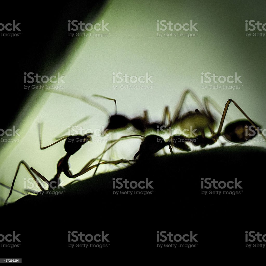 Ants on green background royalty-free stock photo