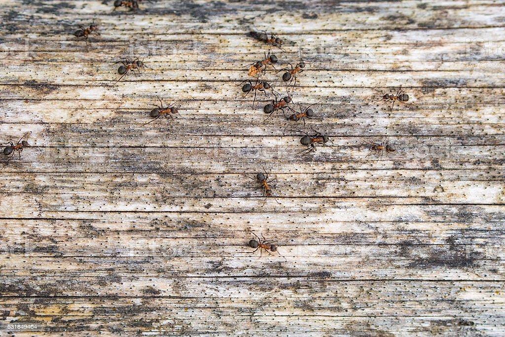 ants on the tree stock photo