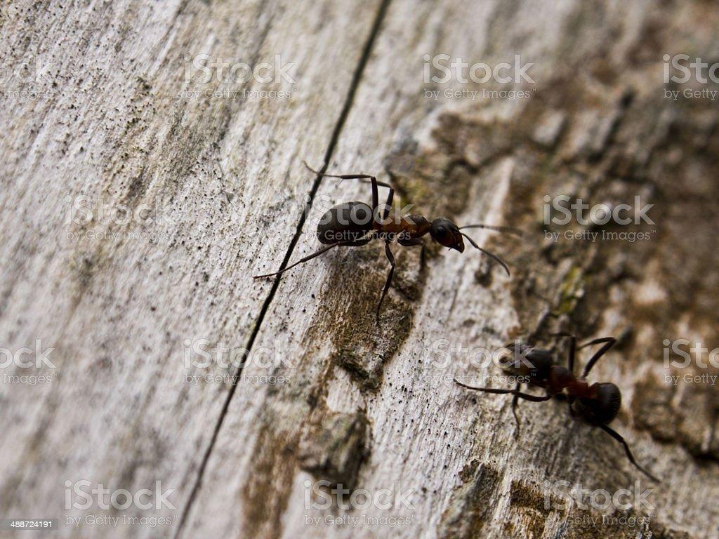Ants On Tree stock photo