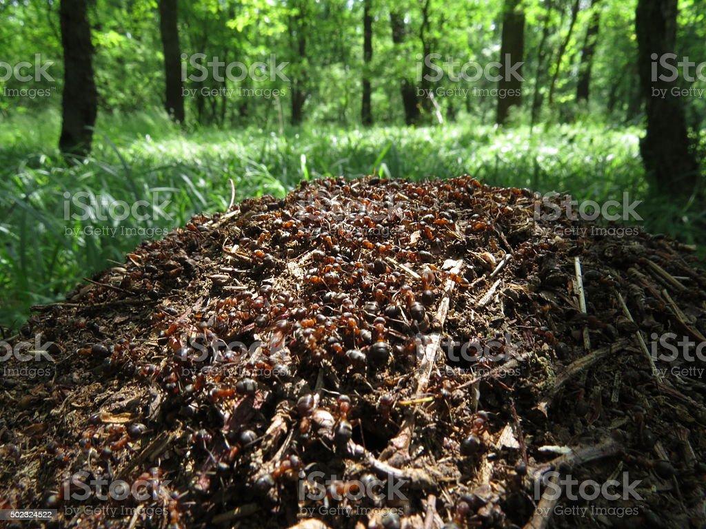 ants stock photo