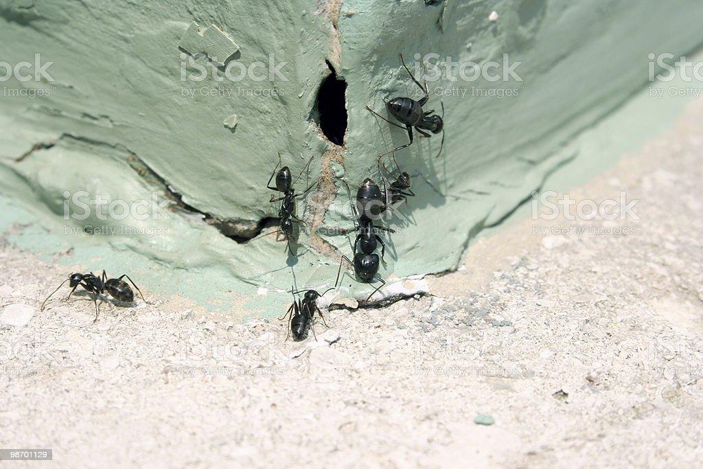 Ants...! royalty-free stock photo