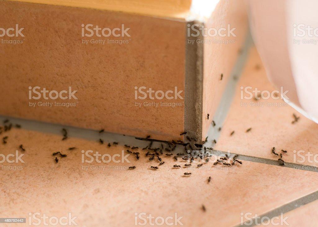 Ants plague stock photo