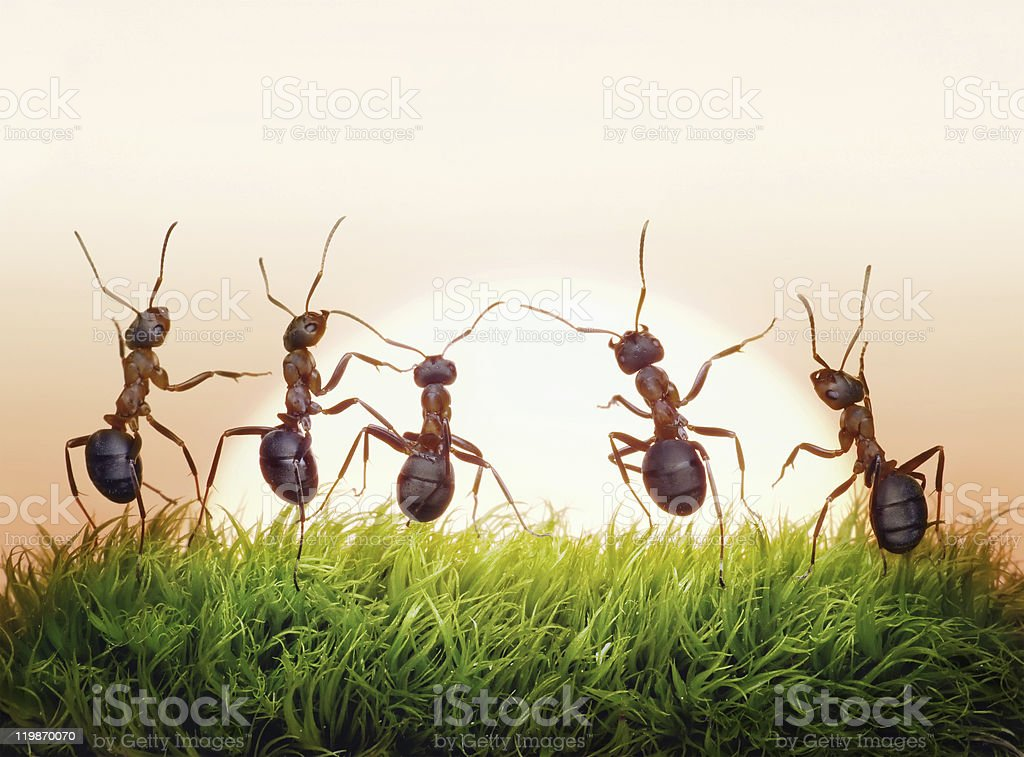 ants team on sunrise,  concept of success stock photo