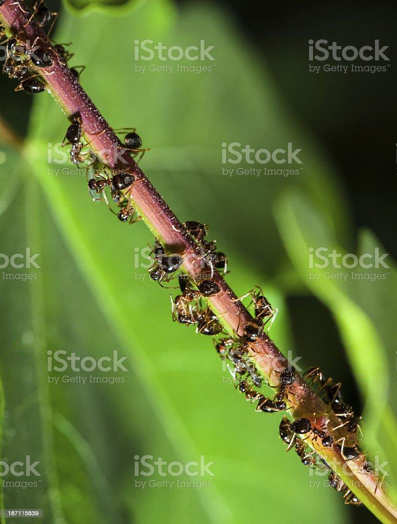 Ants traffic jam stock photo