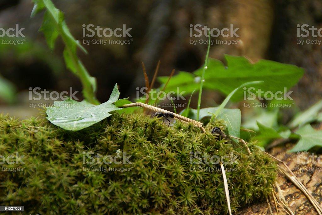 Ants World royalty-free stock photo