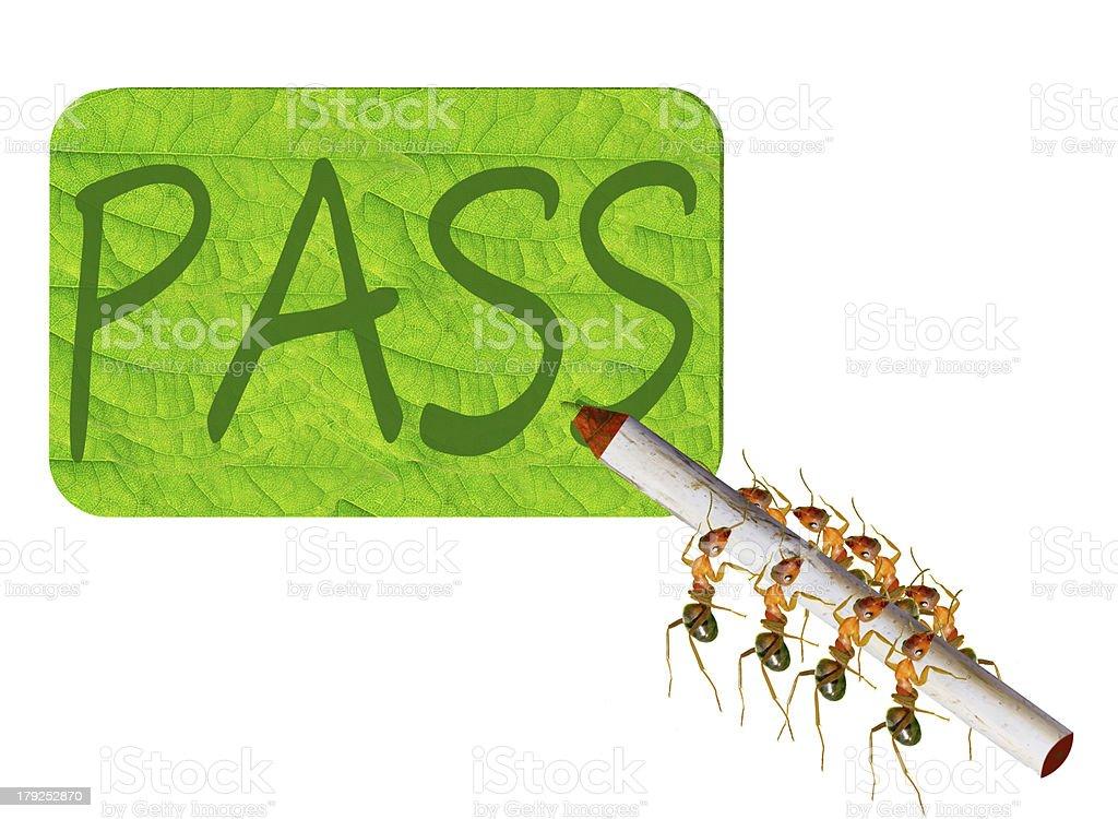 Ants writing royalty-free stock photo