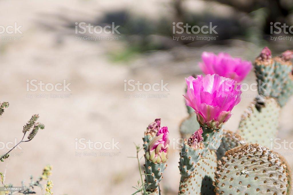 Anza Borrego Desert Landscape stock photo