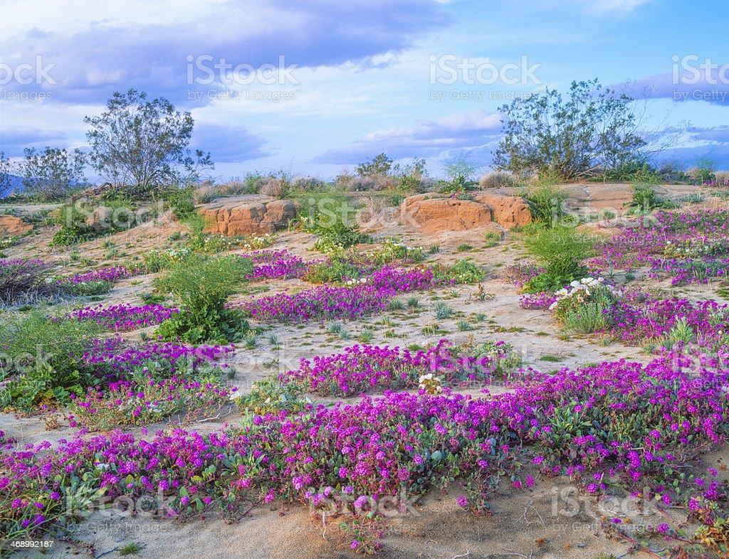 Anza Borrego Desert State Park, California (P) stock photo