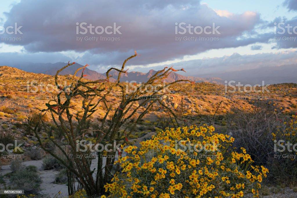 Anza-Borrego Desert at Sunrise B stock photo