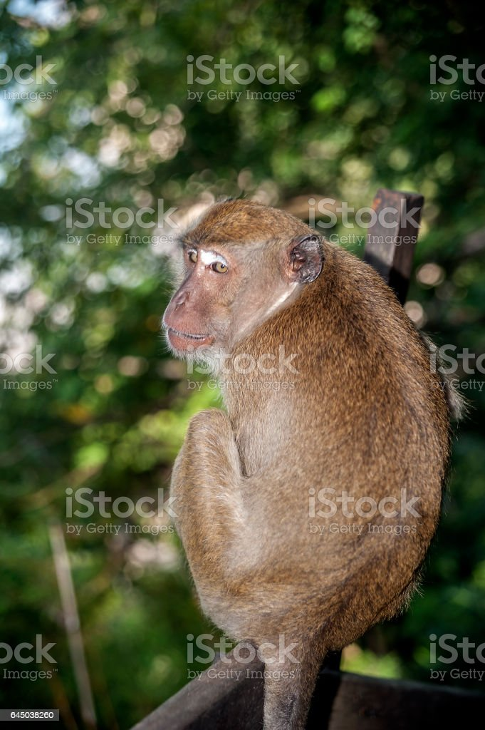 Ao Nang Village. The so-called 'monkey trail' in the jungle. stock photo